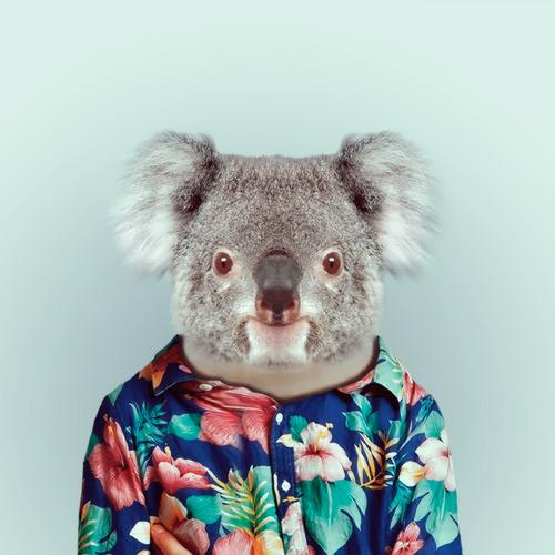 Koala by Yago Partal