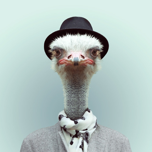Ostrich by Yago Partal